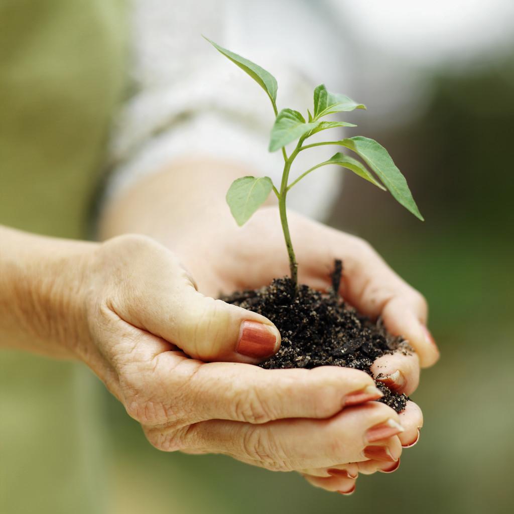 Seeding for seedlings