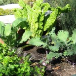 vegetables in a garden