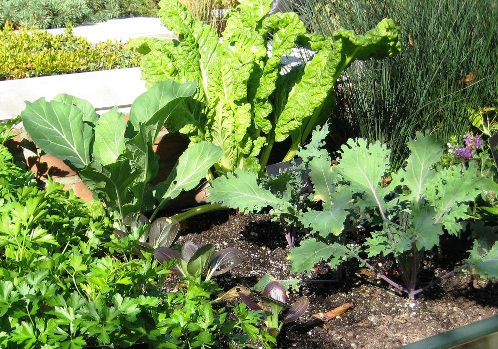 organic vegetable gardening  u2013 kenosha county