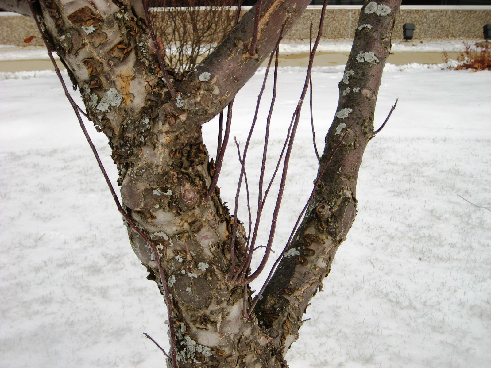 Apple Insect Sprays And Fruit Tree Pruning Kenosha County