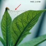 Spider mites on houseplant